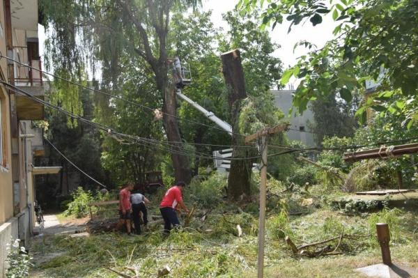 Tăieri de arbori în cartierul Republicii