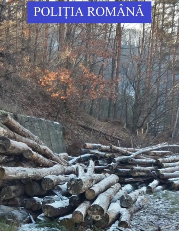 Captură de material lemnos la Turț. La Carei baronul local face legea
