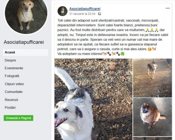 Asociaţia pentru protecţia animalelor Puffi Carei și investițiile Primăriei. Se caută iubitori de animale