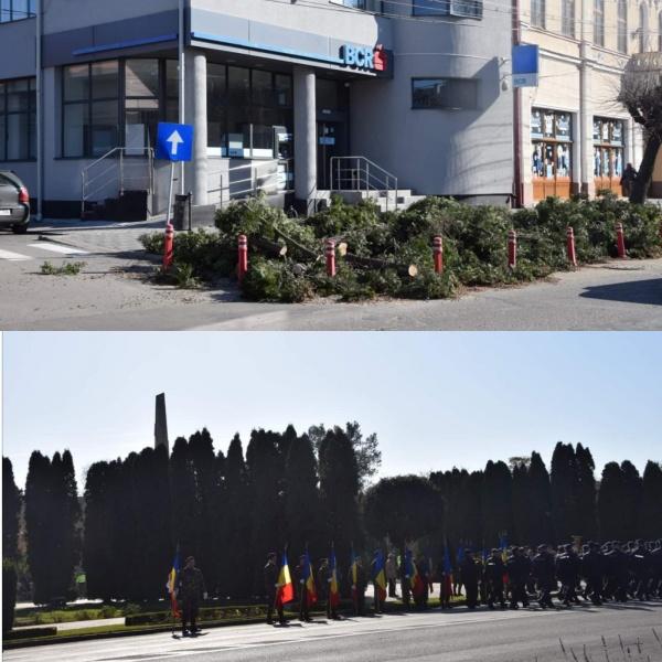 Se taie tuia din fața BCR Carei. Cei care acoperă Monumentul Ostașului Român sunt protejați