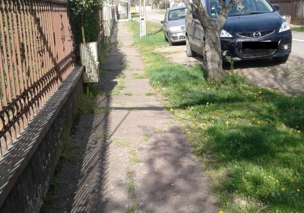 Minune! Au înverzit trotuarele nu demult asfaltate la Carei