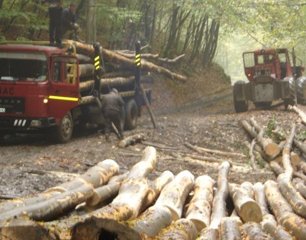 Petiție pentru oprirea exportului de materie primă lemnoasă pe perioada carantinei