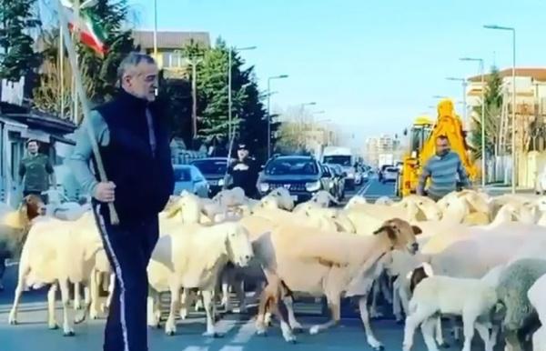 Reguli privind însoțirea animalelor în circulația pe drumurile publice