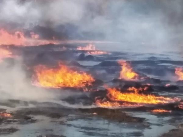 Incendiu între Carei și Căpleni. Video