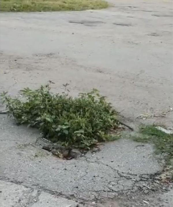 Primarul din Carei a mărit spațiile verzi din oraș după distrugerea celor din centru.Video