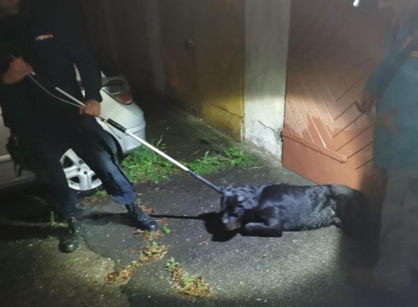 Jandarmi solicitați pentru un câine agresiv