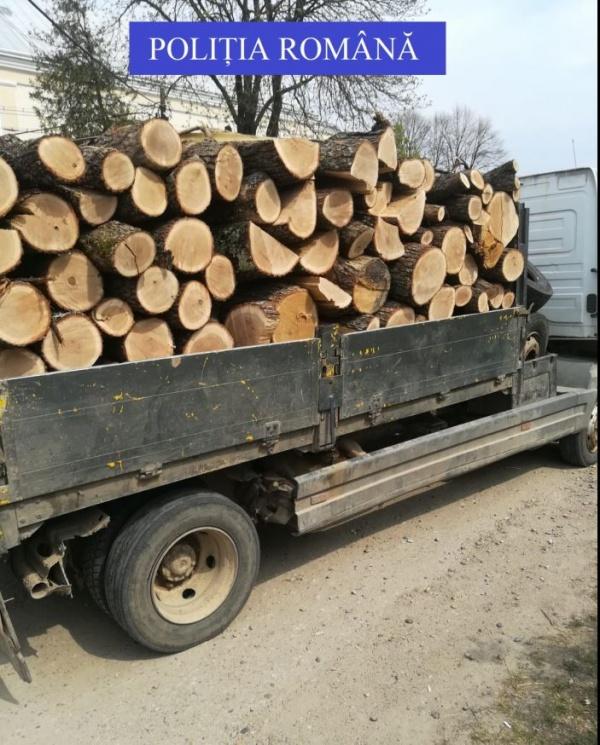 Captură de material lemnos la Săcășeni