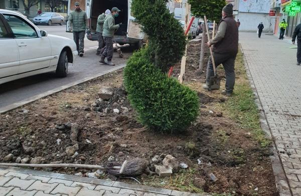 Plantări de tuia și puieți printre bolovani și resturi de beton la Carei