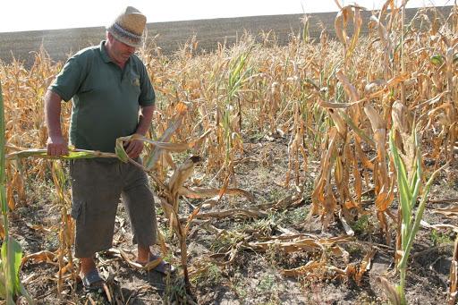 Alianța PNL-UDMR-USR a votat în comisii împotriva acordării de despăgubiri fermierilor afectați de secetă