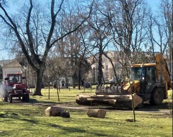 La cine ajunge masa lemnoasă din tăierile din Parcul Dendrologic Carei?