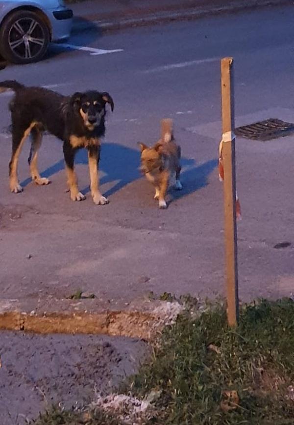 Doi câini terorizează careienii din cartierul Mihai Viteazul I