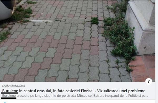 Buruienile și limba română dau bătăi de cap unui deputat sătmărean