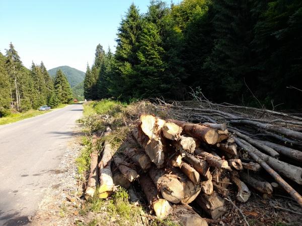 Ocolul silvic Ciumești pierde contractul cu CL Băiuț. Sesizare la Garda Forestieră